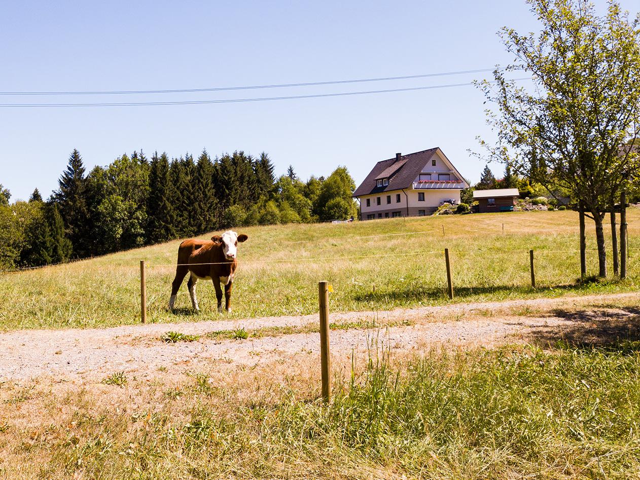 Gaestehaus Baur Kuh