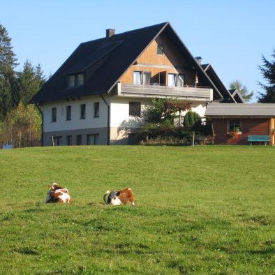 Gaestehaus Baur Kühe